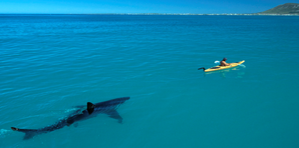 analise tecnica tubaroes do mercado